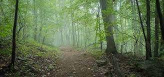 Footpath through woods